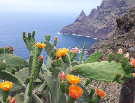 Leben auf Teneriffa: Die imposante Nordküste Teneriffas