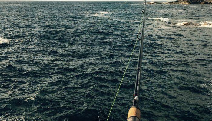 Leben auf Teneriffa: Angeln Tunfisch