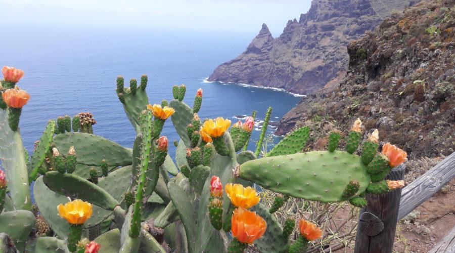 Wandern im Anaga-Gebirge ist ein Highlight auf Teneriffa