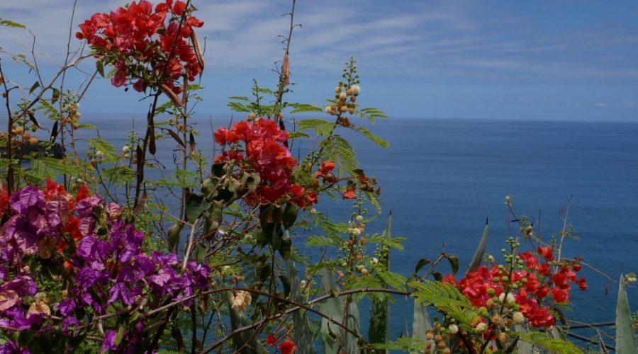 Blumenvielfalt auf Teneriffa