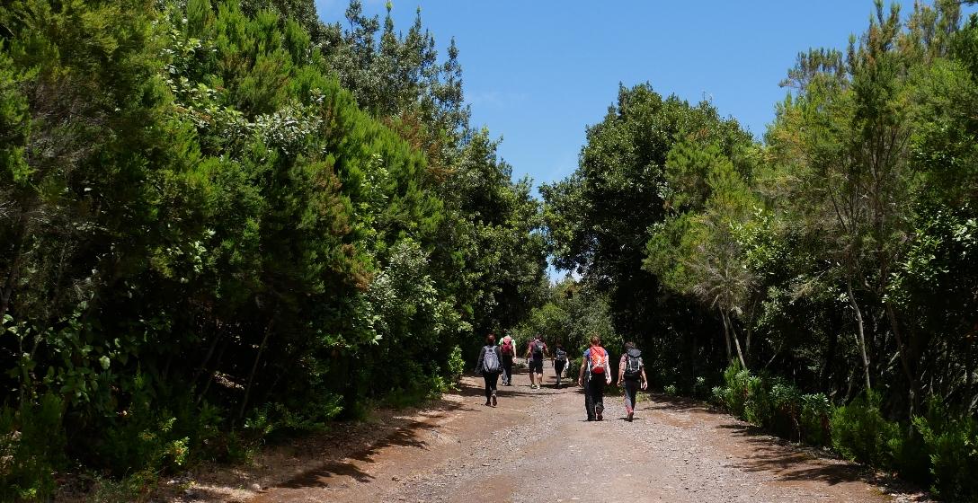 Wandern auf Teneriffa in der Gruppe