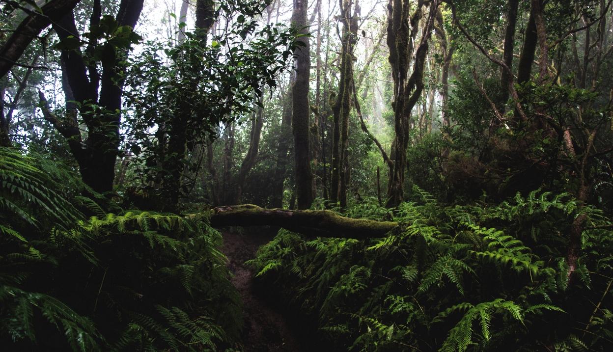 Sehenswürdigkeit auf Teneriffa: Ein Highlight ist das Anaga-Gebirge