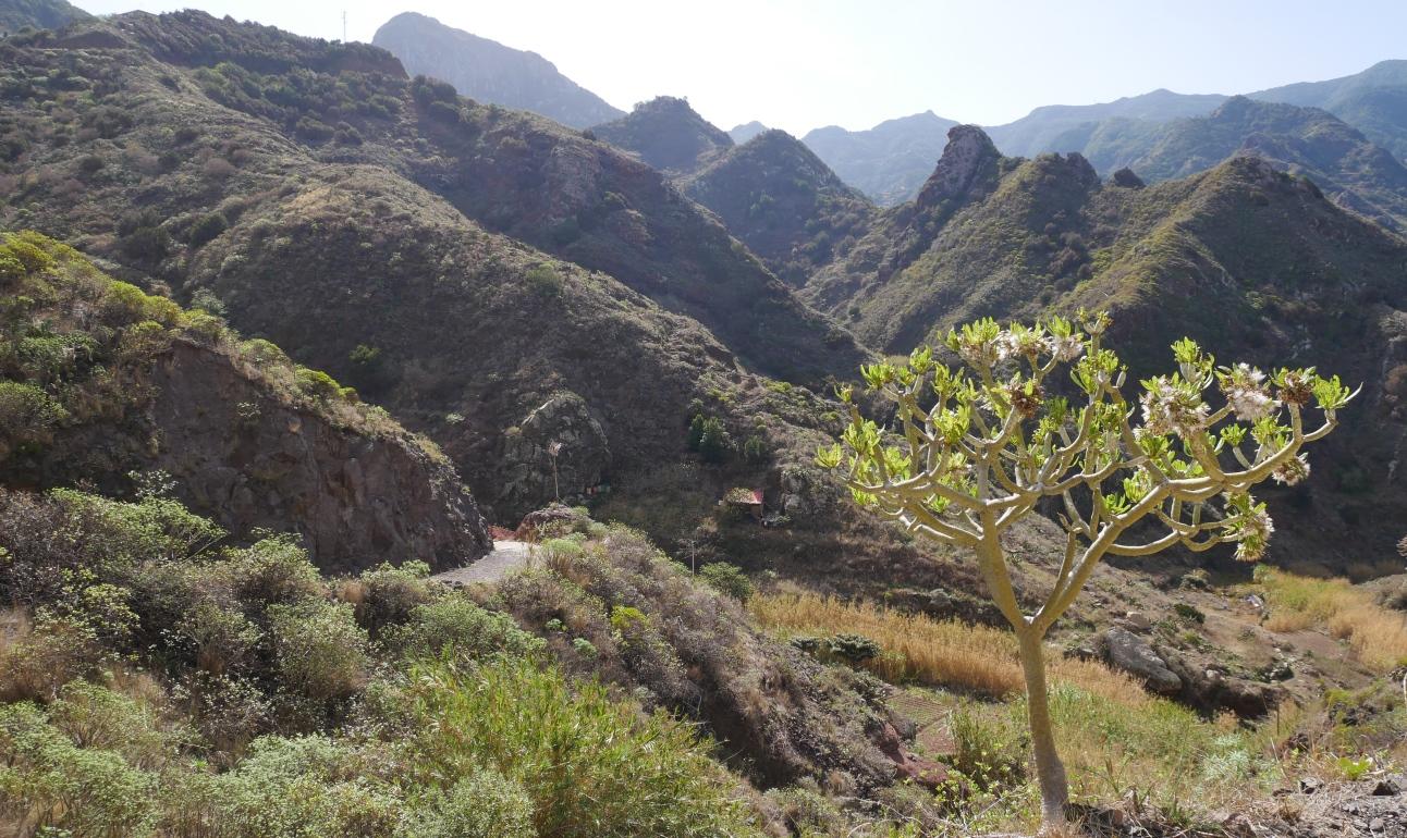 Wanderung auf Pfaden des Anaga-Gebirges
