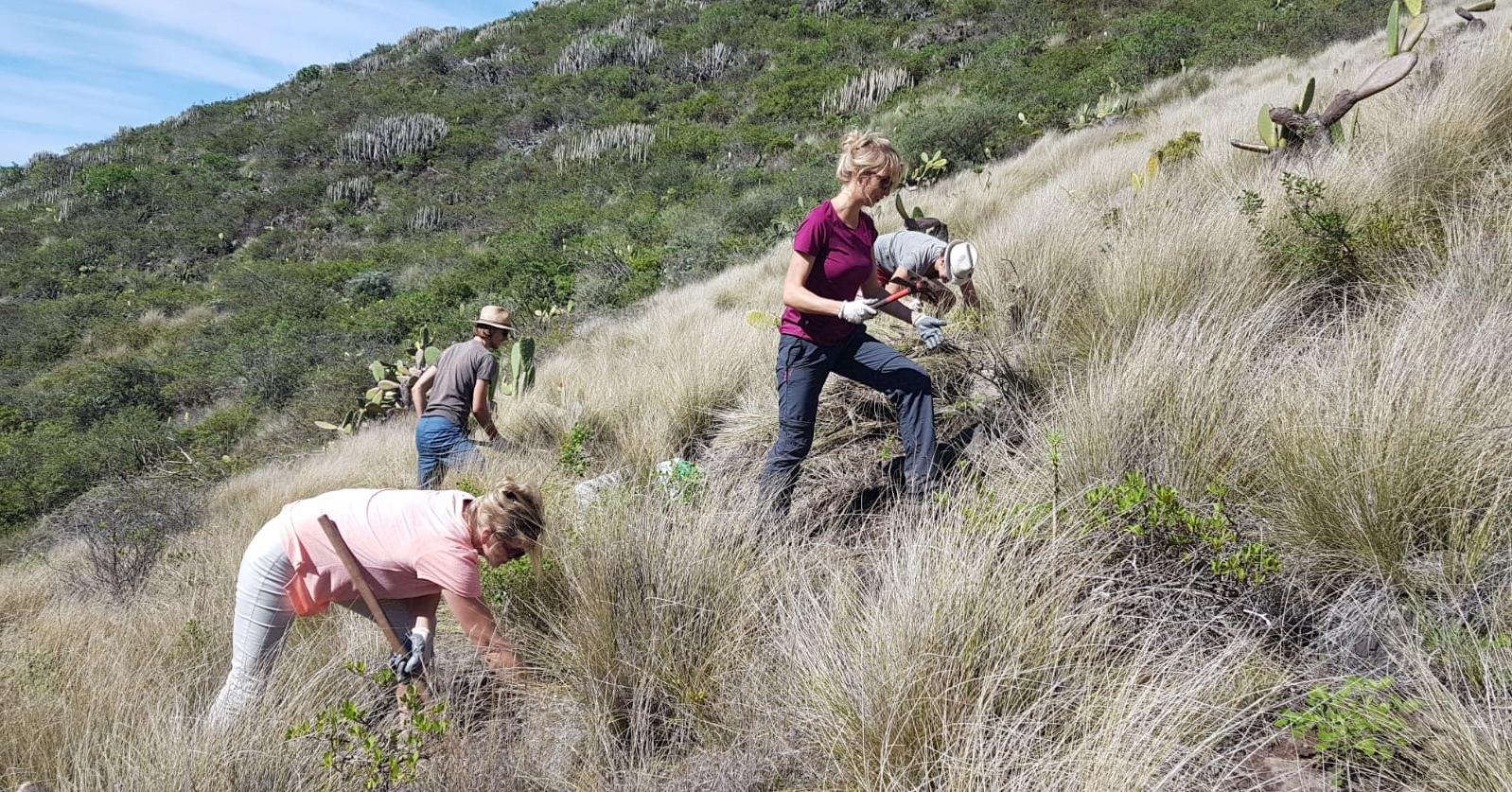 Ehrenamt auf Teneriffa: Im Naturschutz aktiv