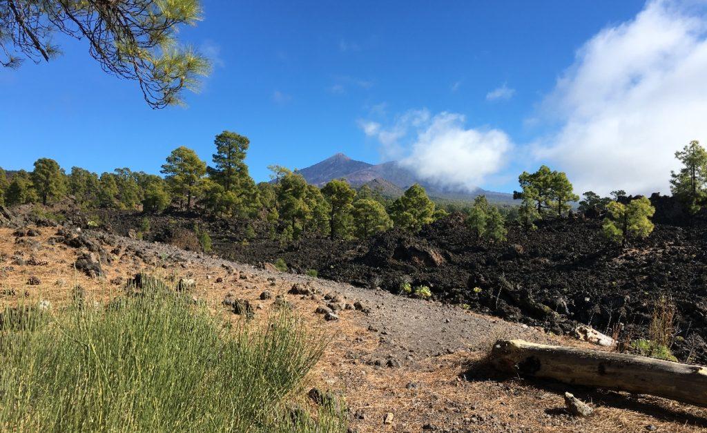 Beschilderung Wanderung Teneriffa Mandelblütenzeit - Blick auf den Teide