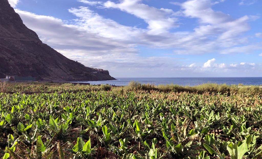 Bananenplantagen auf La Gomera soweit das Auge reicht