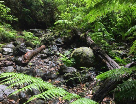 La Palma Kanaren: Der Dschungel von La Palma